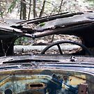 Relic in the Woods by reefer