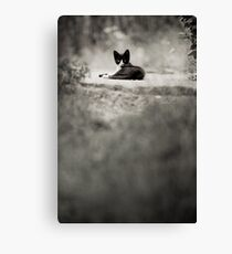 OnePhotoPerDay Series: 203 by L. Canvas Print