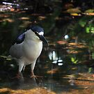 Night Heron II by D R Moore