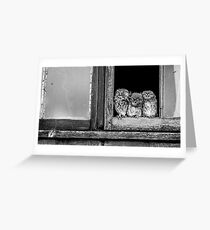 Little owl family at window Greeting Card