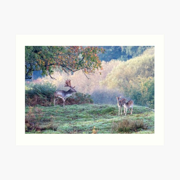 Autumn deer in the forest Art Print