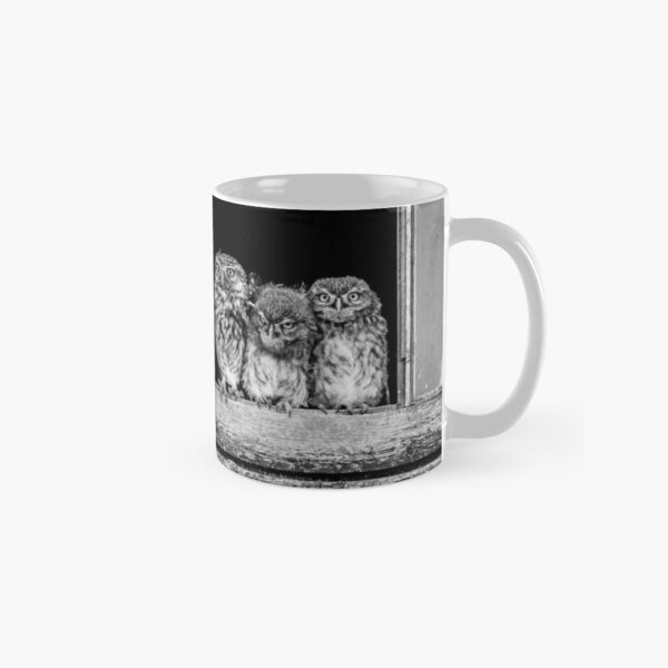 Little owl family at window Classic Mug