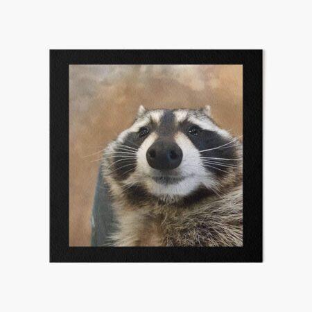 Sad Raccoon Meme Art Board Print