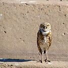 Arizona Wildlife by Sherry Pundt