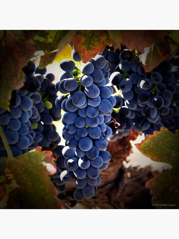 Grapes by Reydoo