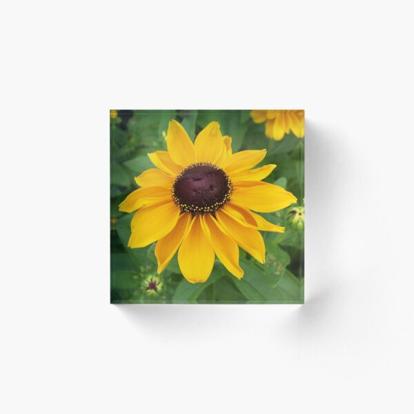 Black Eyed Susan Sitting Pretty Acrylic Block