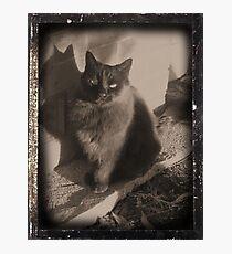 'Ringo' Photographic Print