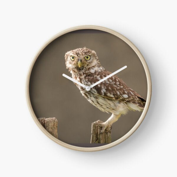 Owl on a post staring at you Clock