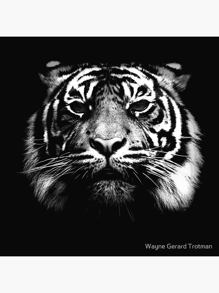 Illustrated Tiger  by redmoondragon