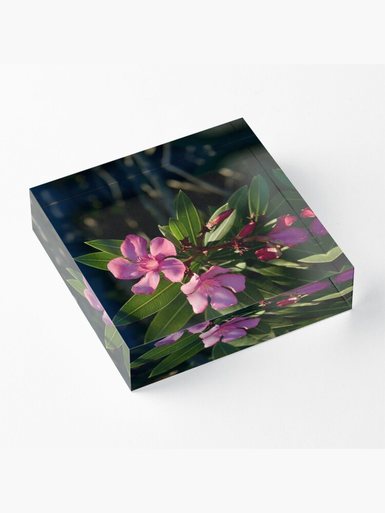 Alternate view of Pink Oleander Acrylic Block
