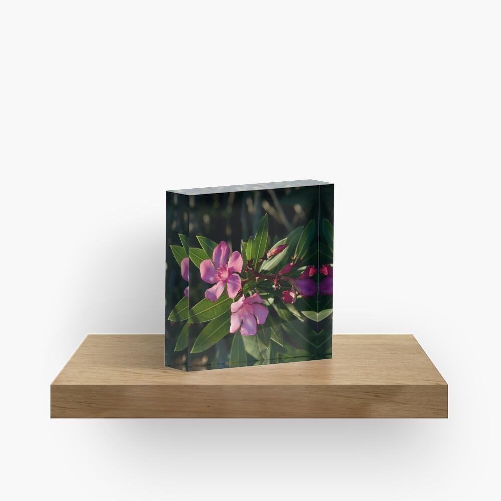 Pink Oleander Acrylic Block