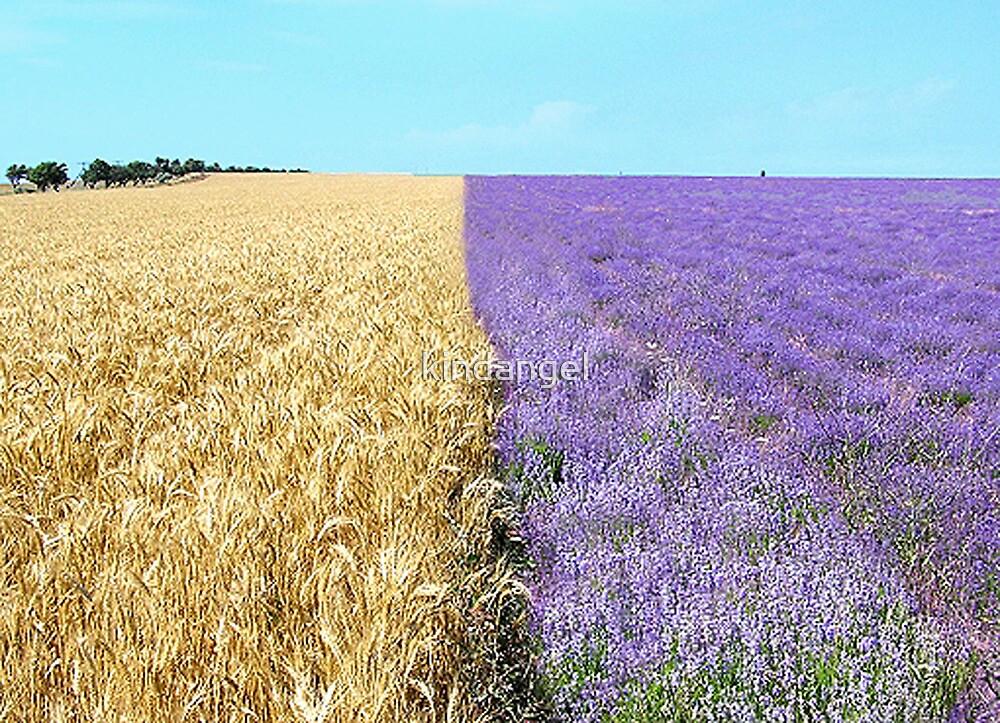 The big season of a lavender 1. Fields of Ukraine.   by kindangel
