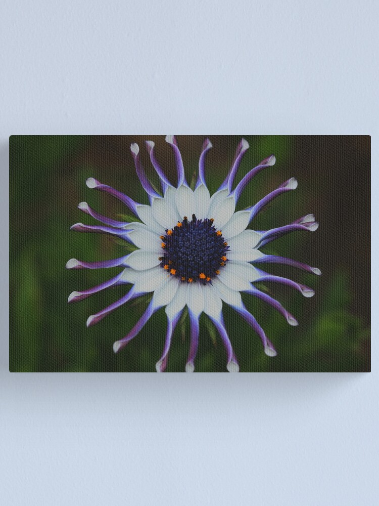 Alternate view of Osteospermum Whirligig Canvas Print