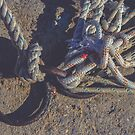 Iron mooring rings by Alexander Nedviga