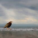 Green Heron on the Beach by Kathy Weaver