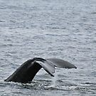 Whale Tail, in Cold Alaska Waters by Despot