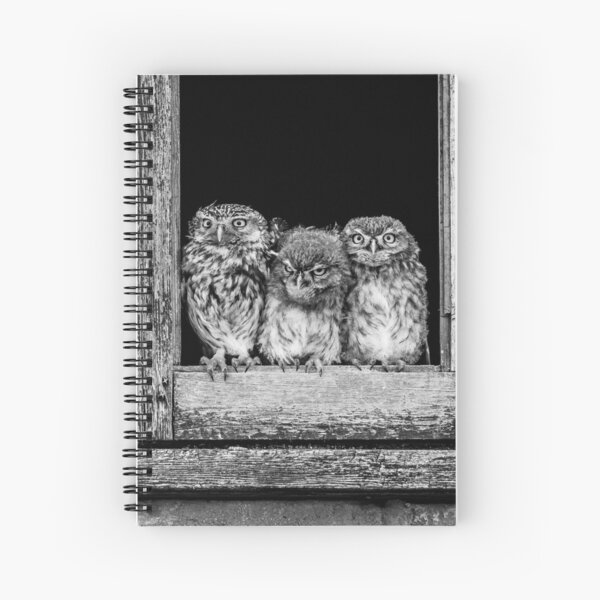 Little owl family at window Spiral Notebook