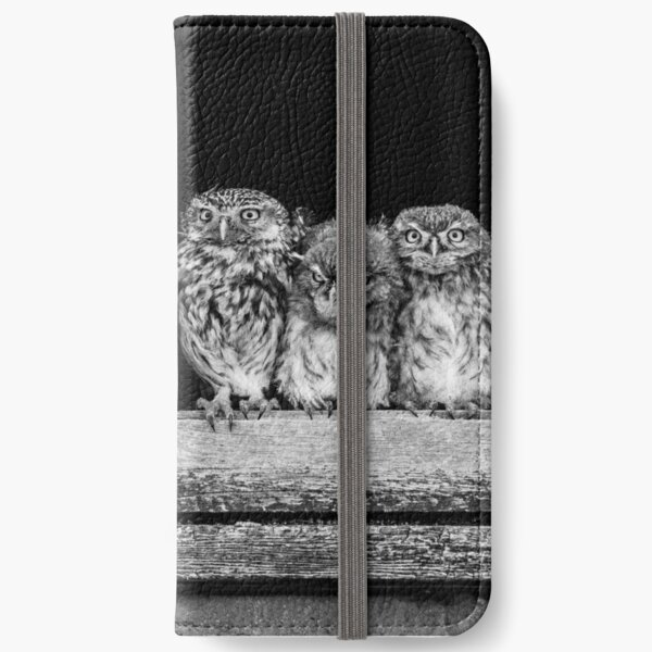 Little owl family at window iPhone Wallet