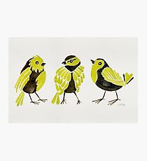 Goldfinches Photographic Print