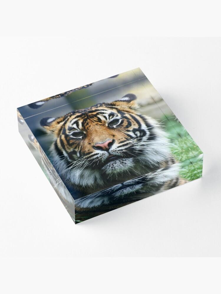 Alternate view of Tiger! Acrylic Block