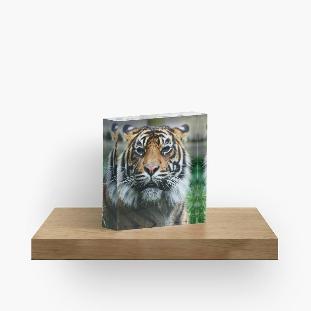 Tiger! Acrylic Block
