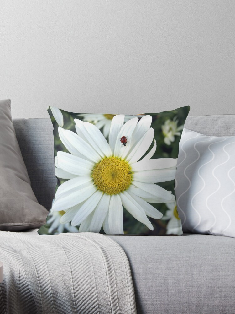 White Daisy Flower and Ladybug  by Amy McDaniel