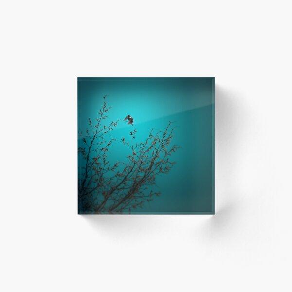 sparrow (002)  Acrylic Block