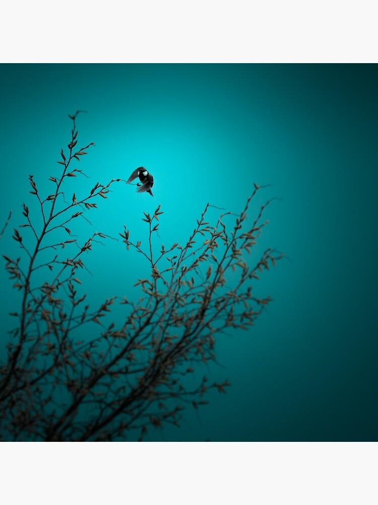 sparrow (002)  by dirkhinz
