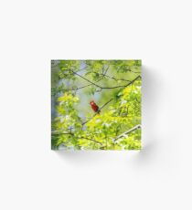 Robin in tree Acrylic Block