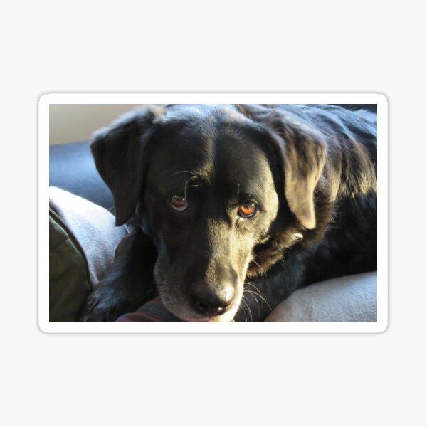 Black Labrador Dog Sticker