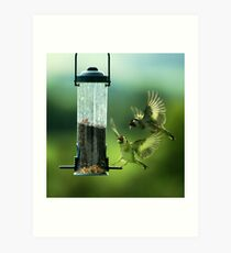 Gold Finch - Double Take! Art Print