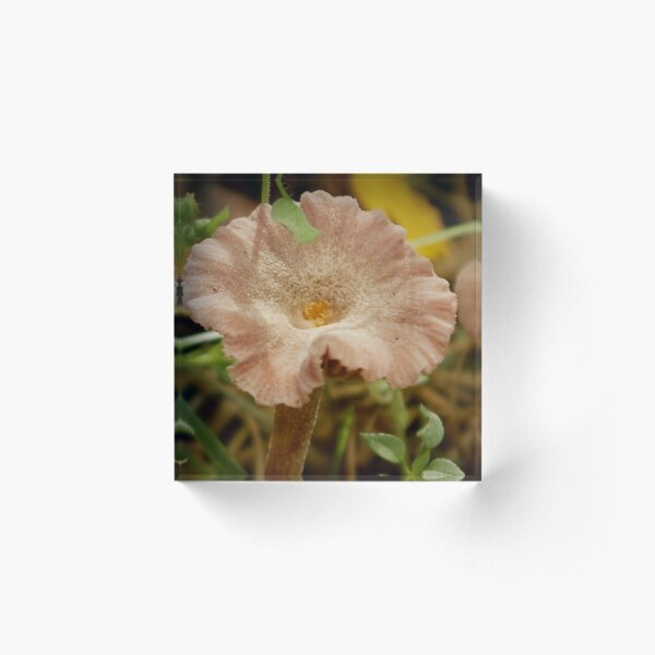Mushroom disguised as soft-pink flower Acrylic Block