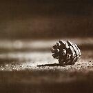 fallen by Purplecactus