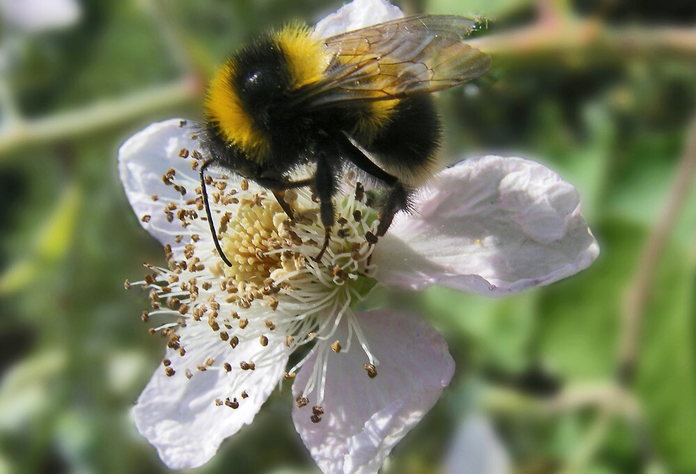 Working Bee by Paul Hickson