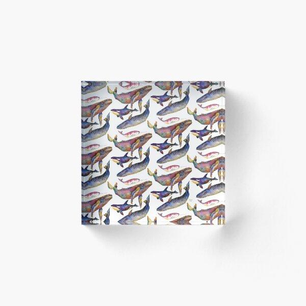 Whale Quartet   Acrylic Block