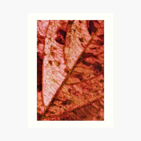 Leaf structure red Art Print