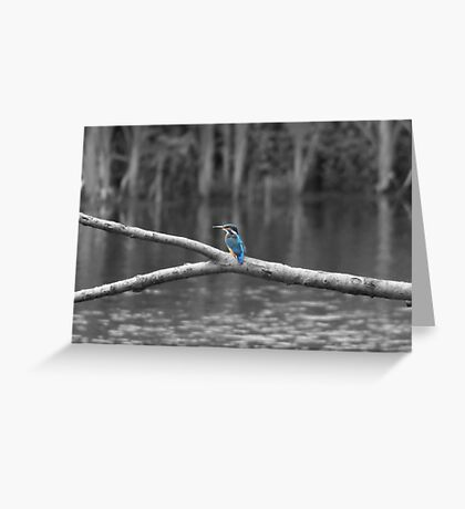 1st Kingfisher ~ Selective Colourisation ~ Greeting Card