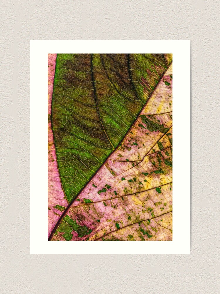 Alternate view of Multi color Leaf structure Art Print