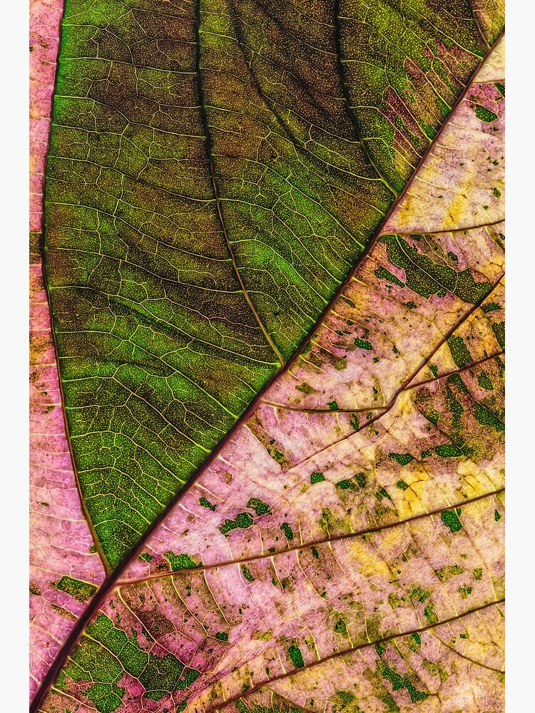 Multi color Leaf structure by fardad