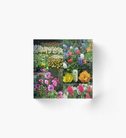 Keukenhof Collage featuring Anemones and Hyacinths Acrylblock