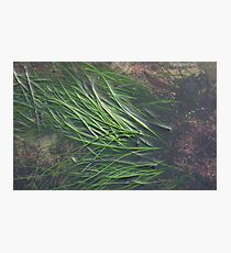 EAL GRASS Photographic Print