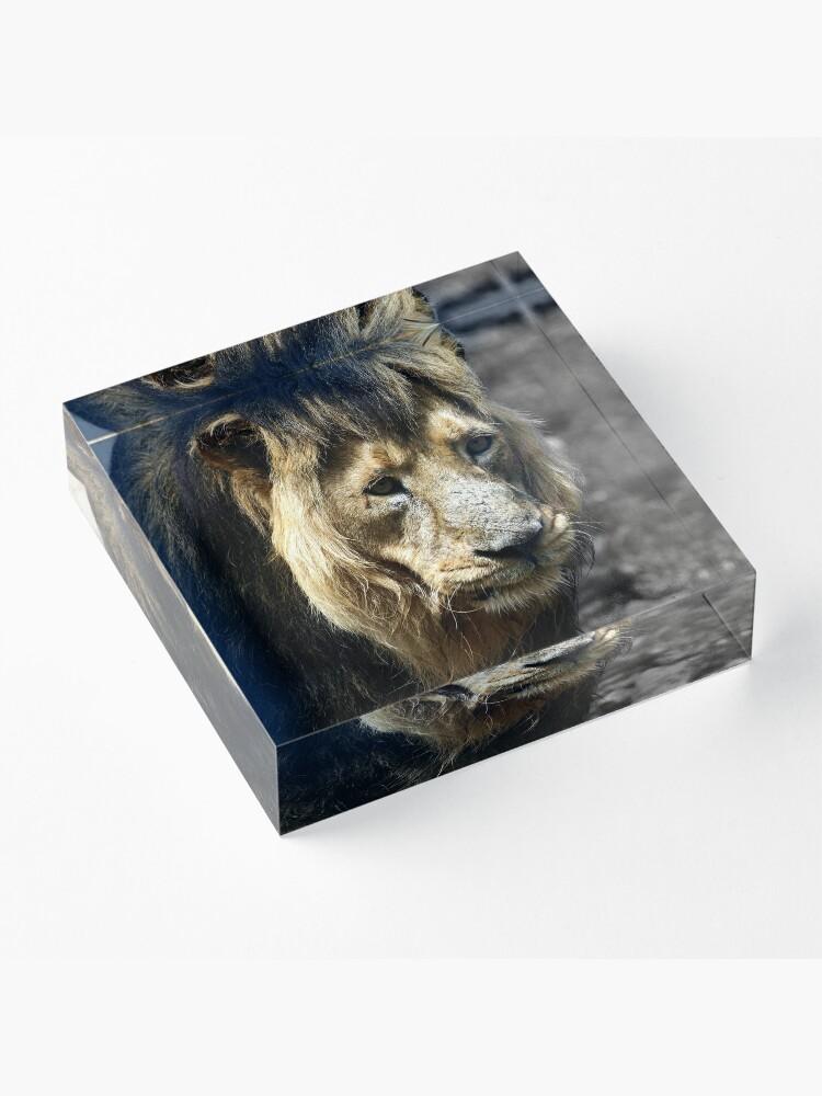 Alternate view of Ashok the Asiatic Lion Acrylic Block