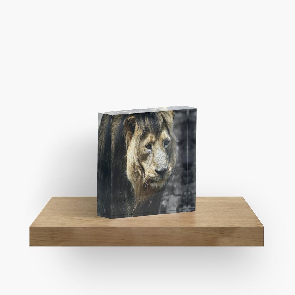 Ashok the Asiatic Lion Acrylic Block