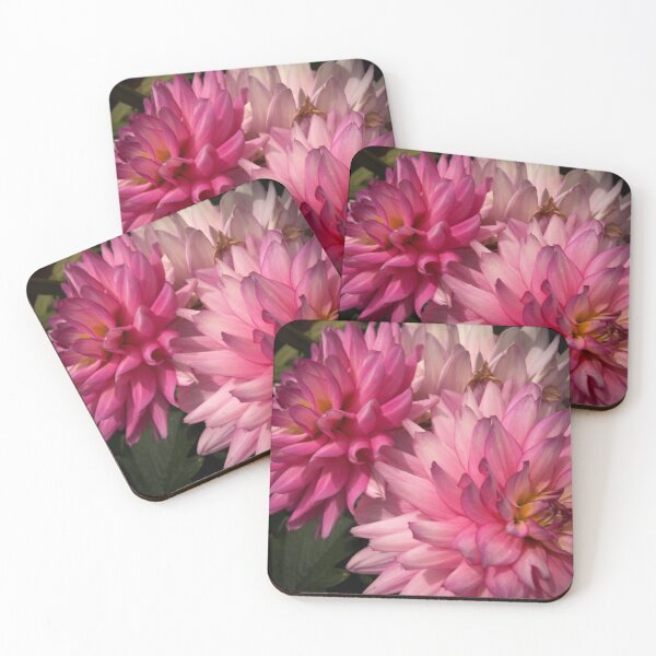 Pink Dahlias from A Gardener's Notebook Coasters (Set of 4)