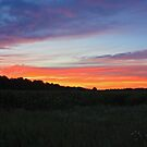 Summer Sunset in the Cornfield by Megan Noble