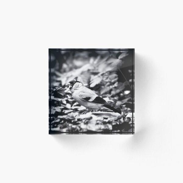 sparrow (003)  Acrylic Block