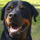 A Rottie smile by Goldendays