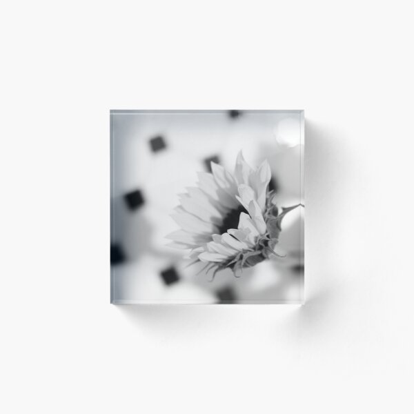 Sunflower in Black and White Acrylic Block