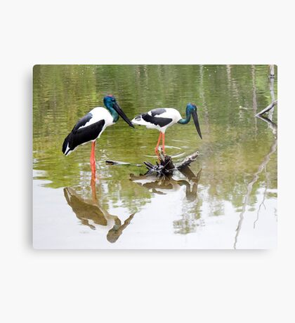 Double trouble - Jabiru Metal Print