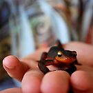 Sal the Newt by Alan Brazzel